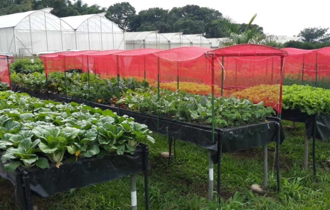 Resultado de imagen de produccion de hortalizas