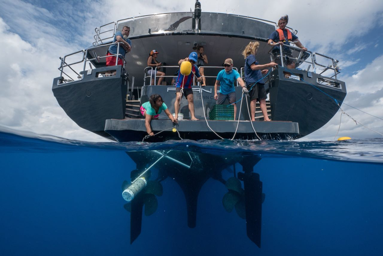 UCR aporta experiencia científica en estudio de corredor marino entre Isla del Coco e Islas Galápagos.