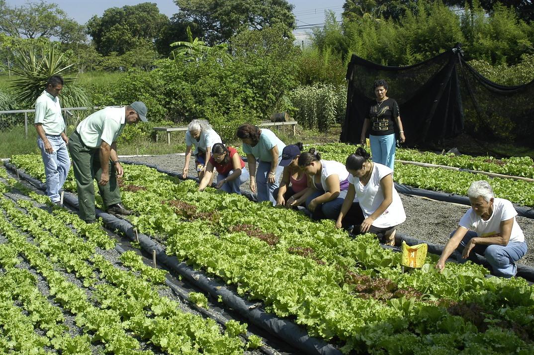La Agricultura Urbana Propone Revegetalizar Las Ciudades